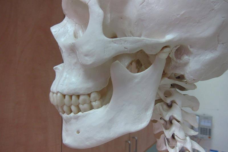מפרק הלסת וטיפולים קרניאליים